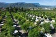Camping-Park Steiner