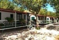 Camping alberello